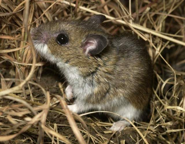 Rodent Control In San Jose Rat And Mice Control By Planet