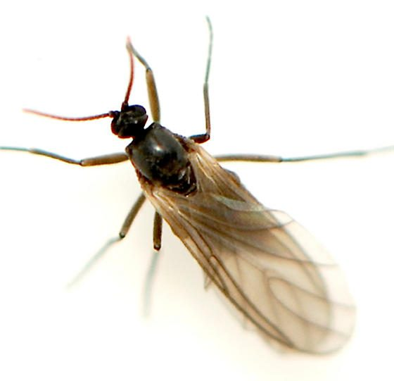 Fly Exterminators, Flies Pest Control Service by Planet Orange