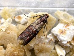 Moths Control By Planet Orange In San Jose And Bay Area