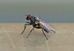 fly exterminators flies pest control service by planet orange. Black Bedroom Furniture Sets. Home Design Ideas
