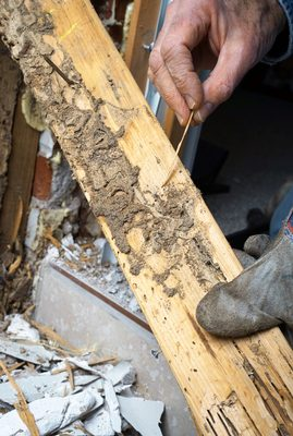 How To Spot Signs Of Termite Damage Planet Orange