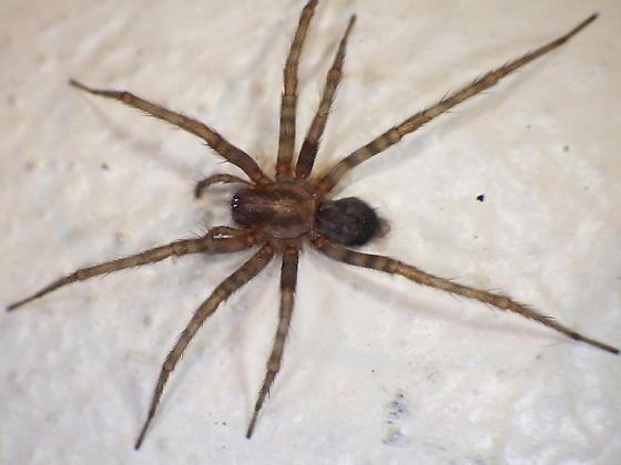 Spider Control in San Jose by Planet Orange