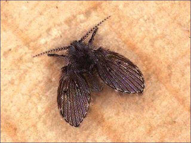 Fly Exterminators Flies Pest Control Service By Planet Orange
