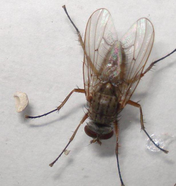 Fly Exterminators, Flies Pest Control Service by Planet Orange
