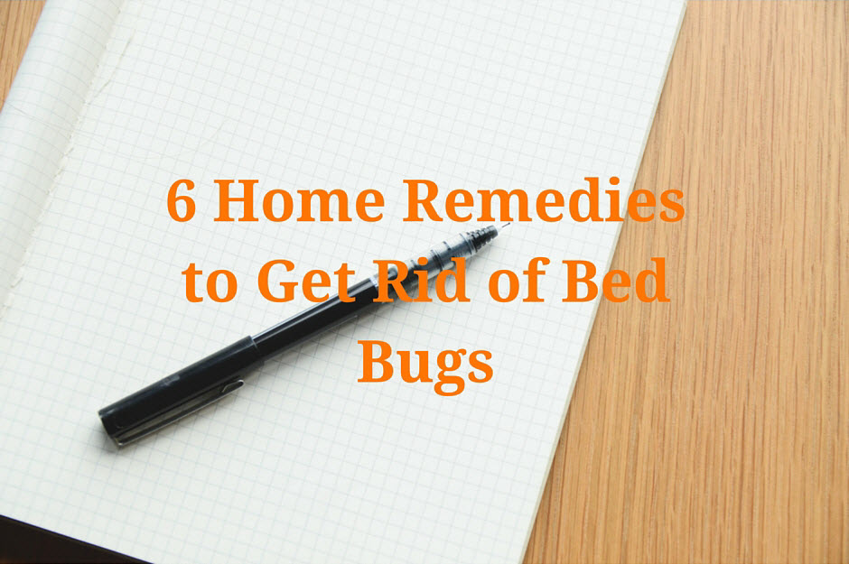 6 Home Remedies To Get Rid Of Bed Bugs Planet Orange