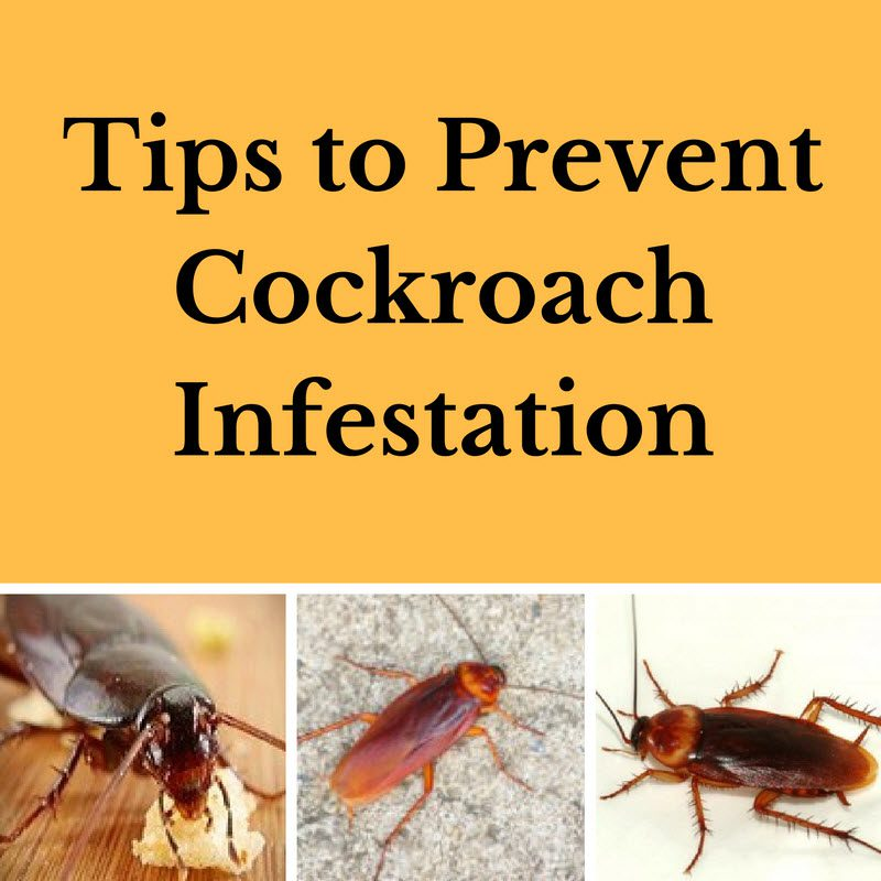 Tips To Prevent Cockroach Infestation By Planet Orange
